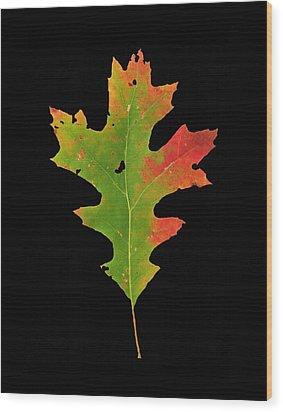 Autumn Red Oak Leaf 1 Wood Print
