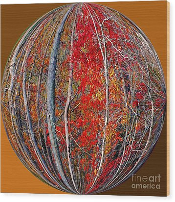 Autumn Reds Wood Print by Scott Cameron