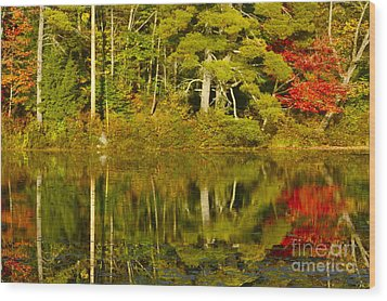 Wood Print featuring the photograph Autumn Reflections by Alice Mainville