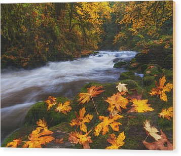 Autumn Returns Wood Print by Darren  White