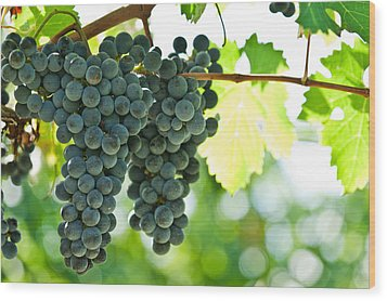 Autumn Ripe Red Wine Grapes Right Before Harvest Wood Print by Ulrich Schade