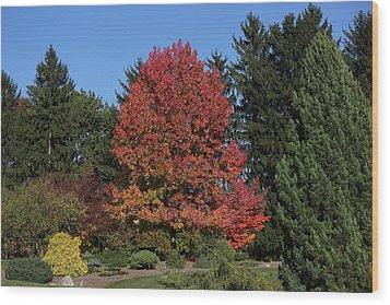 Autumn Scene Wood Print