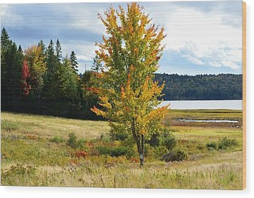 Autumn Shores Of Maine Wood Print by Lena Hatch