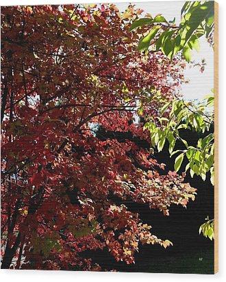 Autumn Snowball Bush Wood Print by Will Borden