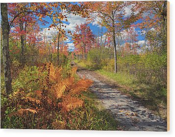 Autumn Splendor Wood Print by Bill Wakeley