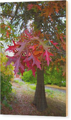 Autumn Splendor Wood Print by Mamie Thornbrue