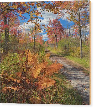 Autumn Splendor Square Wood Print by Bill Wakeley