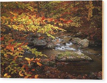 Autumn Stream Wood Print by Bill Wakeley
