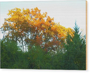 Wood Print featuring the photograph Autumn Sunlight by Pete Trenholm