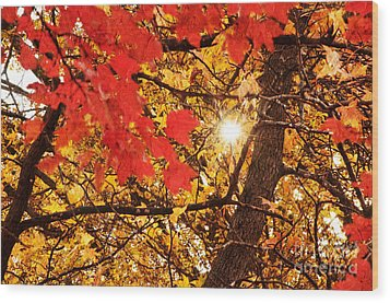 Autumn Sunrise Painterly Wood Print by Andee Design