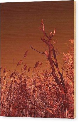 Autumn Surprise  Wood Print by Thomas  MacPherson Jr