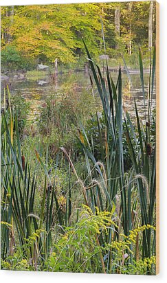 Autumn Swamp Wood Print by Bill Wakeley