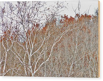 Autumn Sycamores Wood Print