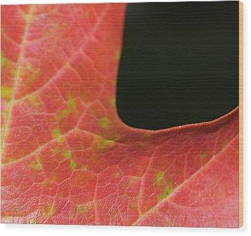 Autumn  Wood Print by Tara Lynn