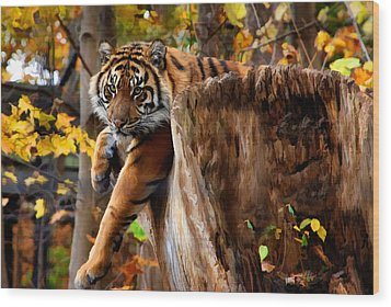 Autumn Tiger Wood Print by Elaine Manley