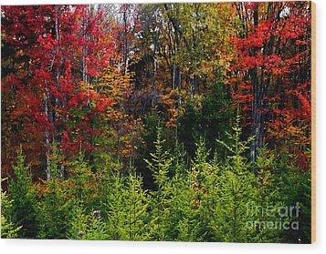 Autumn Tree Foliage Wood Print by Lanjee Chee