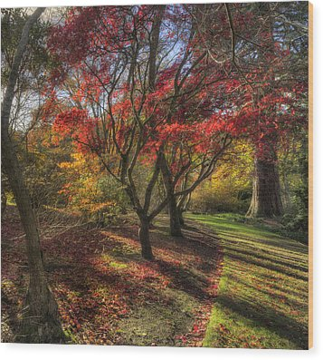 Autumn Tree Sunshine Wood Print