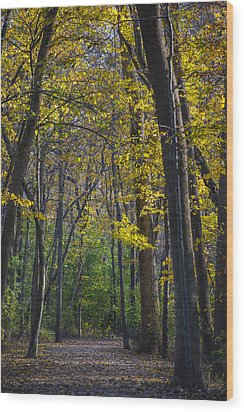 Wood Print featuring the photograph Autumn Trees Alley by Sebastian Musial
