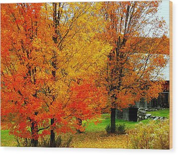 Wood Print featuring the photograph Autumn Trees By Barn by Rodney Lee Williams