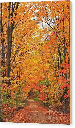 Autumn Tunnel Of Trees Wood Print by Terri Gostola