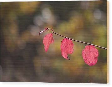 Wood Print featuring the photograph Autumn Twig With Red Leaves by Jivko Nakev