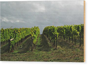 Wood Print featuring the photograph Autumn Vineyard by Mindy Bench