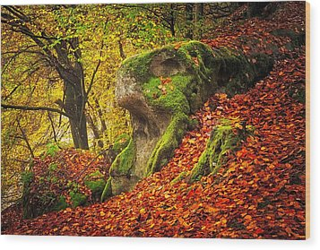 Autumn Walk In Forrest Wood Print by Maciej Markiewicz