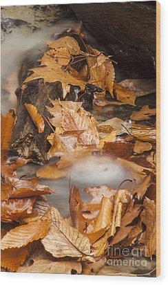 Autumn Water Eddy Wood Print by Darleen Stry