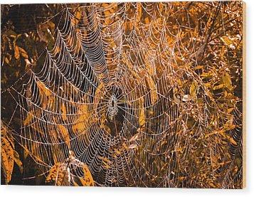 Autumn Web Wood Print by Brian Stevens