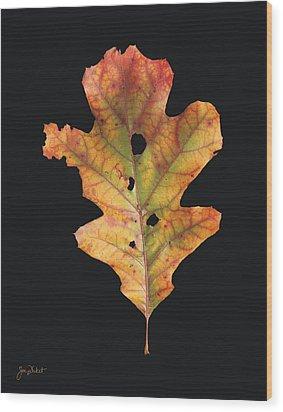 Autumn White Oak Leaf 2 Wood Print