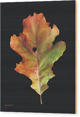 Autumn White Oak Leaf 3 Wood Print