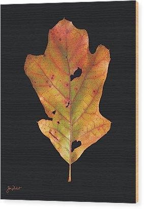 Autumn White Oak Leaf Wood Print