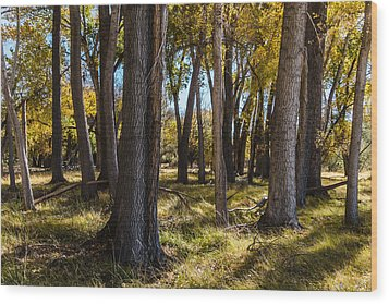 Autumn Wood Wood Print by Beverly Parks