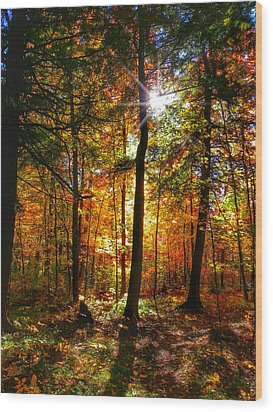Autumn Woods Wood Print by Brook Burling