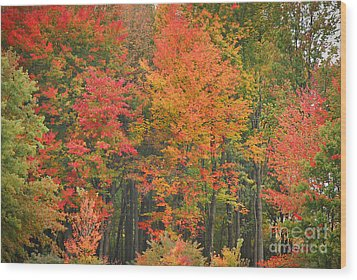 Autumn Woods Wood Print by Mary Carol Story