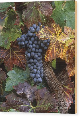 Autumn Zinfandel Cluster Wood Print by Craig Lovell