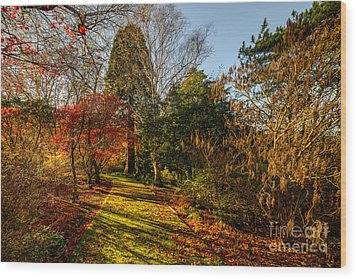Autumnal Forest Wood Print by Adrian Evans