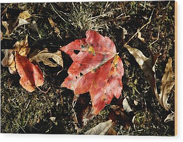 Autumns End Wood Print by JAMART Photography