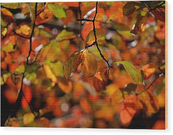 Autumn's Firey Show Wood Print