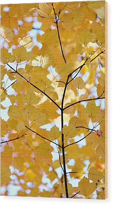 Autumn's Golden Leaves Wood Print by Jennie Marie Schell
