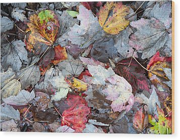 Autumn's Leaves Wood Print by Allen Carroll