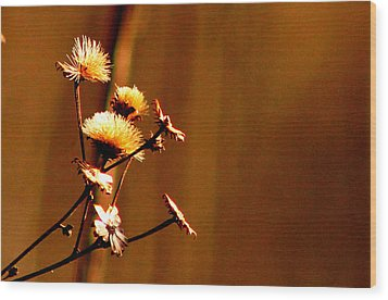 Wood Print featuring the photograph Autumn's Moment by Bruce Patrick Smith