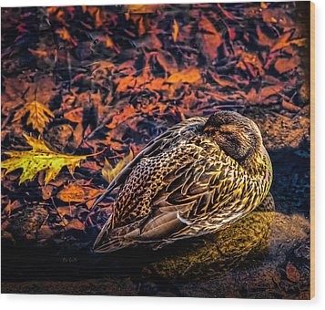 Autumns Sleepy Duck Wood Print by Bob Orsillo