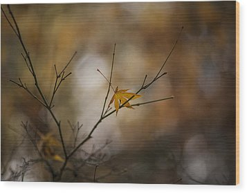 Autumns Solitude Wood Print by Mike Reid