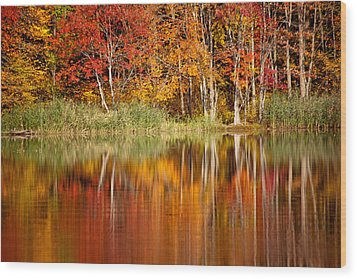Autumns True Colors Wood Print by Karol Livote