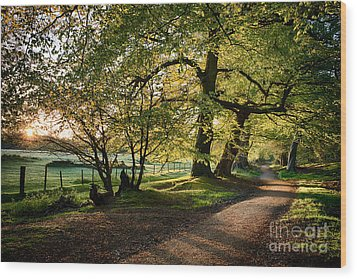 Avenue Of Light Wood Print by Tim Gainey
