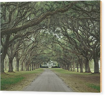 147706-avenue Of The Oaks  Wood Print
