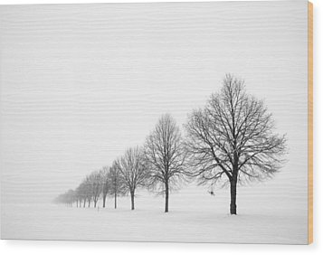 Avenue With Row Of Trees In Winter Wood Print