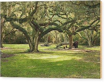 Avery Island Oaks Wood Print by Scott Pellegrin