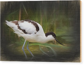 Avocet Wood Print